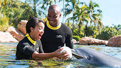 Create memories that will last a lifetime at Discovery Cove.
