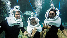 Take an underwater tour of the Grand Reef at Discovery Cove.