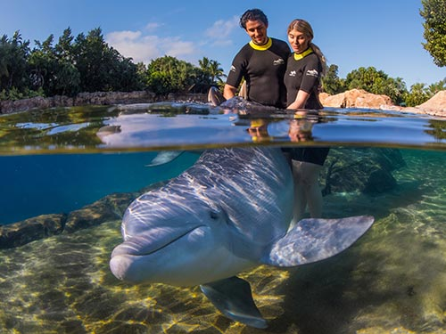 Lady kissing dolphin