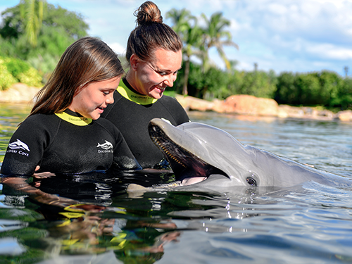 Family looking at dolphin