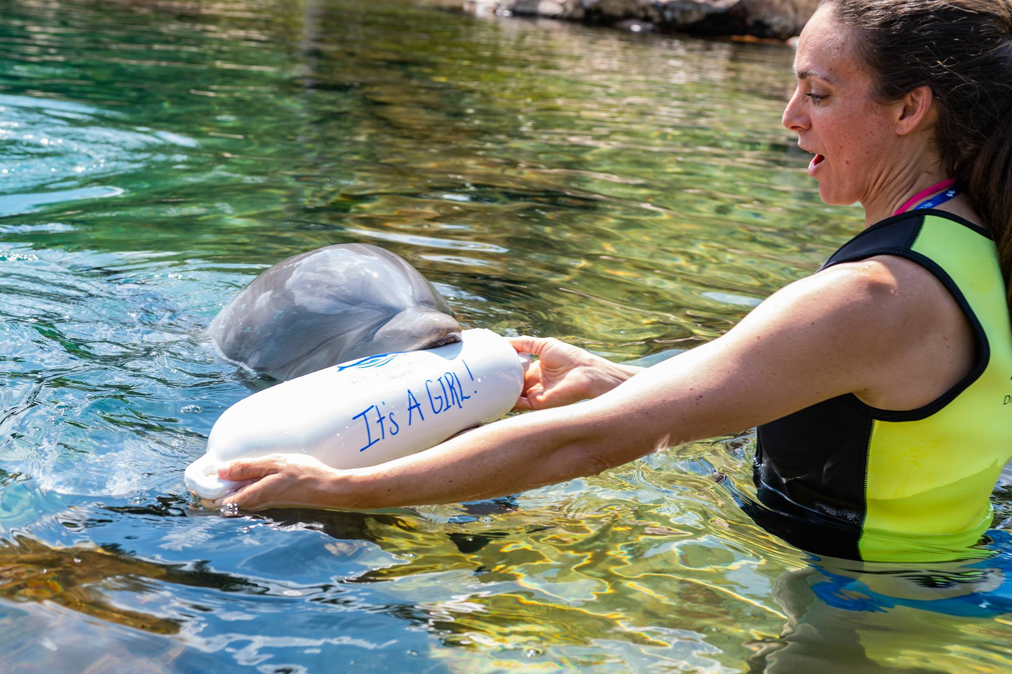 Discovery Cove Celebration Package