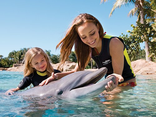 Day Resort + Dolphin Swim at Discovery Cove