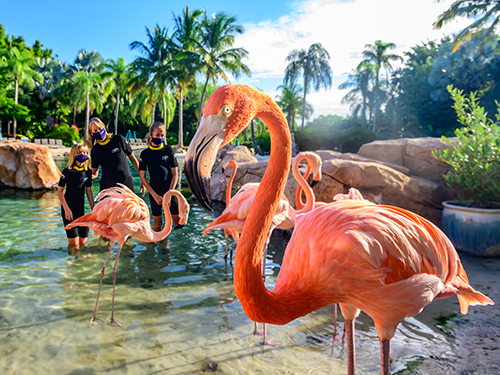 Discovery Cove Flamingo Mingle