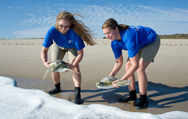 Rescued sea turtle release