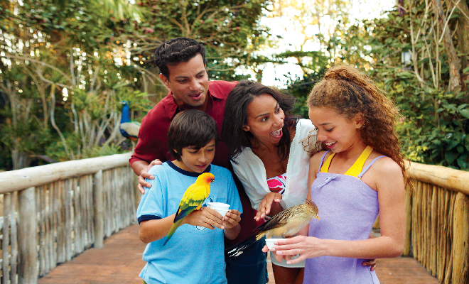 At Discovery Cove you can hand feed more than 250 exotic birds