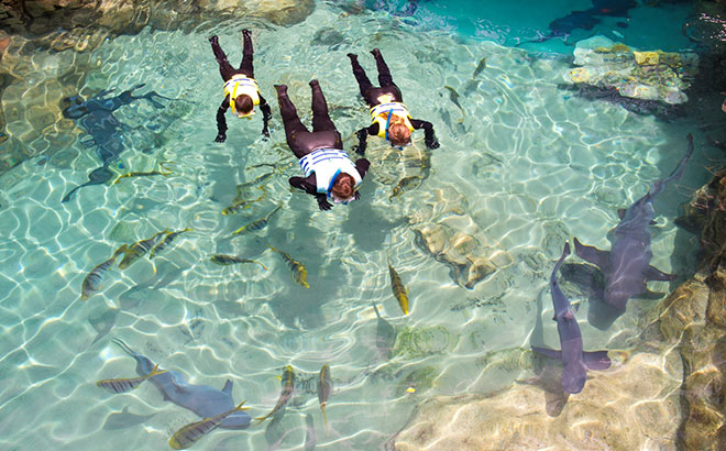 Immerse yourself into the world of sharks at Discovery Cove
