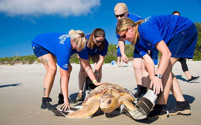 rescued animals back to the ocean