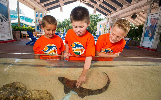 SeaWorld is home to dozens of shark species for you to experience up close