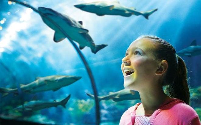 Get up close to sharks at SeaWorld Orlando.