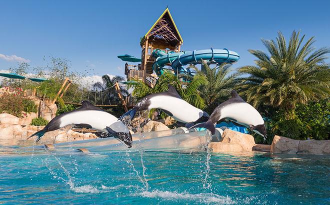 Aquatica Commersons Dolphins