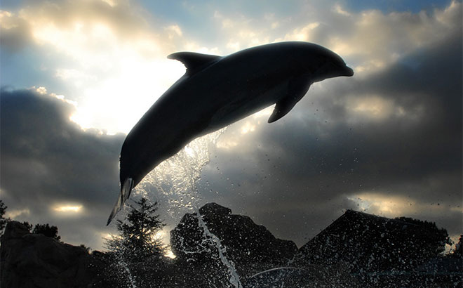 Get up close with incredible dolphins at Discovery Cove and SeaWorld in Orlando, FL.