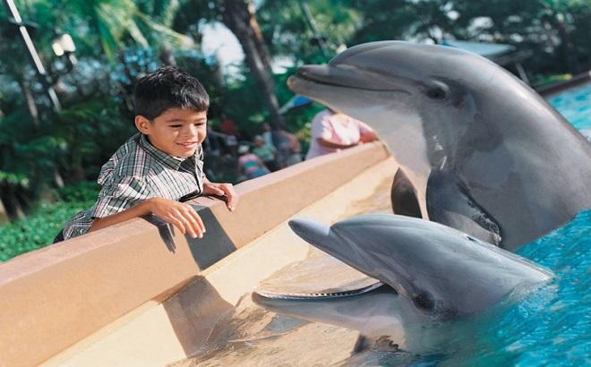 SeaWorld Dolphin Cove