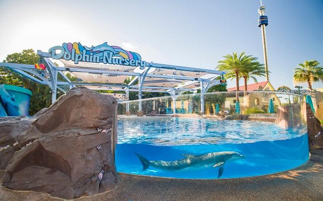 SeaWorld Dolphin Nursery