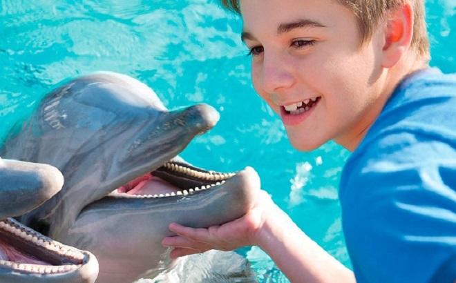 SeaWorld Dolphin Up-Close Tour