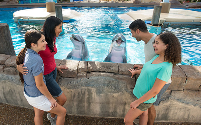 Dolphin Up-Close Tours at SeaWorld Orlando