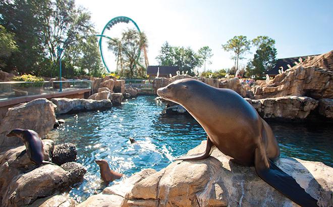 Pacific Point Preserve at SeaWorld Orlando