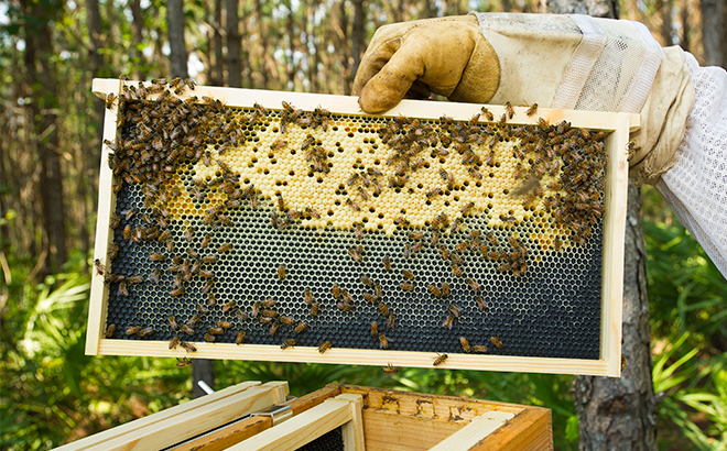 Honey Bee Conservation at SeaWorld