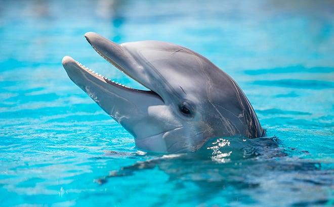 See dolphins at SeaWorld Orlando