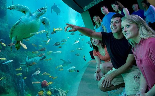 Visit Turtle Trek at SeaWorld Orlando