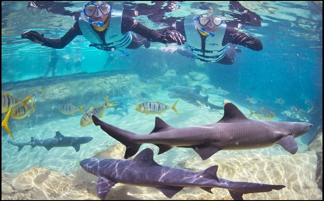 660x410 Shark
