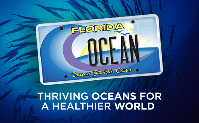 Discover Florida's Oceans License Plate