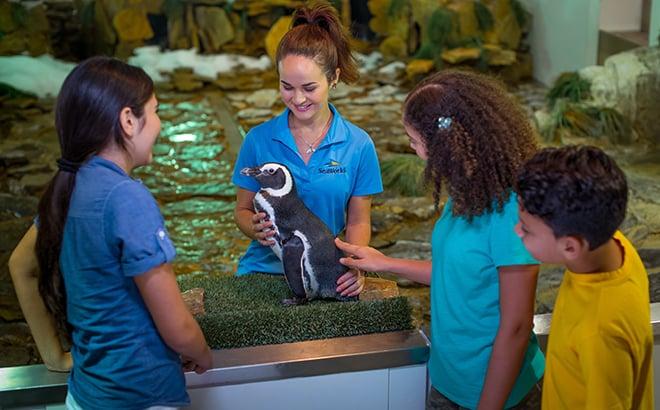 SeaWorld Orlando Penguin Encounter