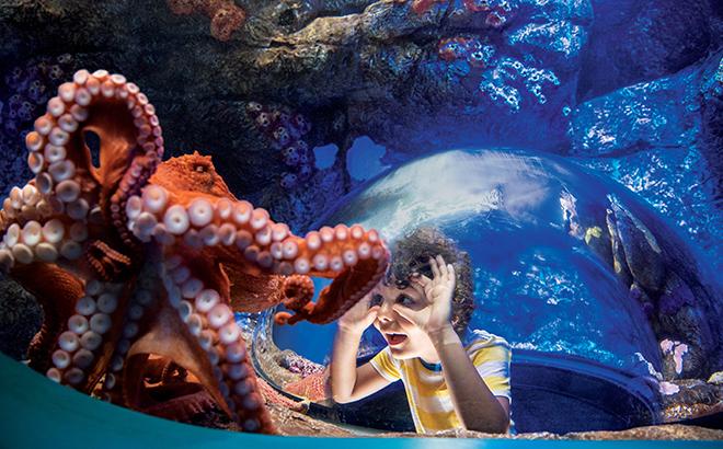 World Octopus Day at SeaWorld Orlando
