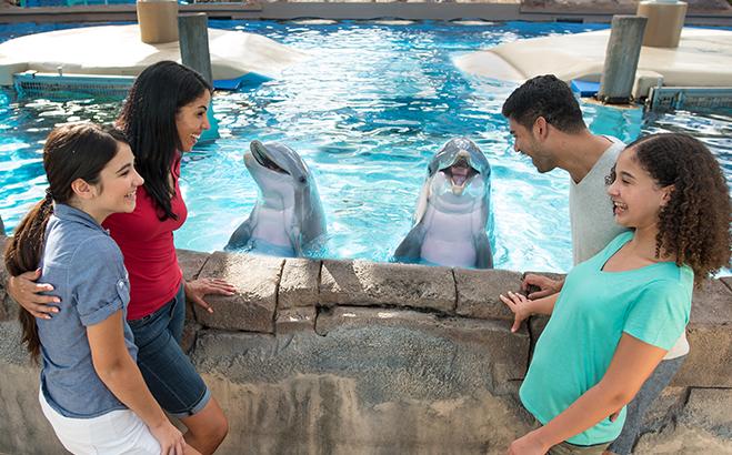 Dolphins Up-Close Tour