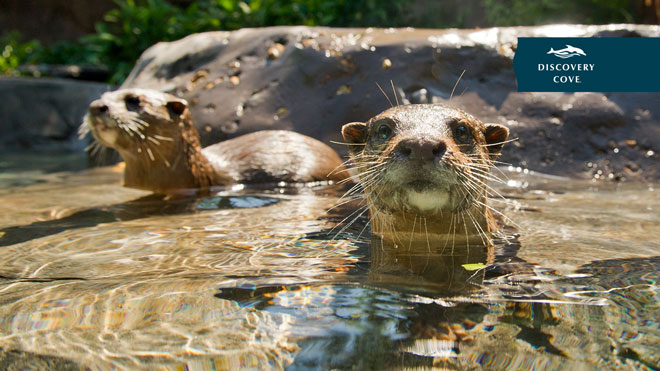 Otter Video Conferencing Background Preview