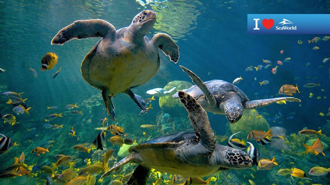 Sea Turtle Virtual Conferencing Background Preview