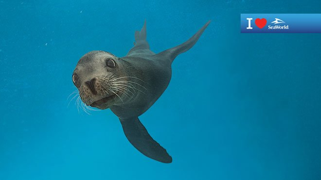 Sea Lion Virtual Conferencing Background Preview