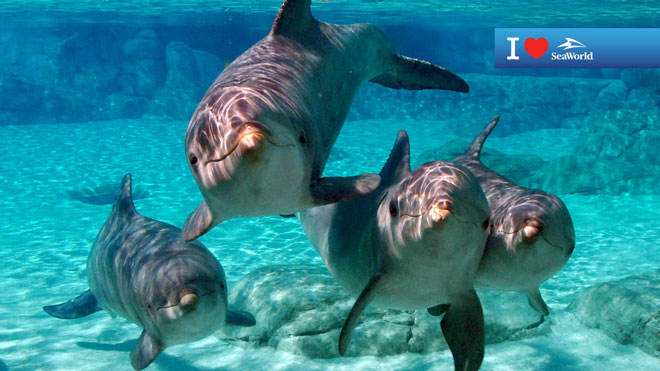 Four Dolphins Underwater Virtual Conferencing Background Preview