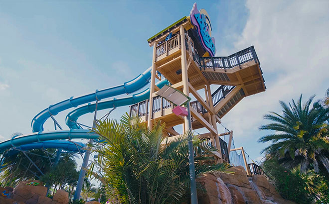 Experience Dolphin Plunge at Aquatica Orlando water park