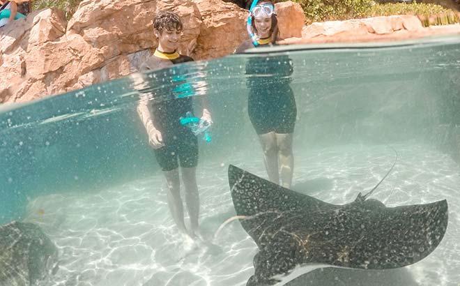 Swim with stingrays at Discovery Cove Orlando