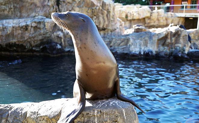 Feed Sea Lions at SeaWorld Orlando