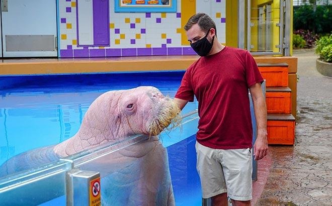 Walrus Encounter at SeaWorld Orlando