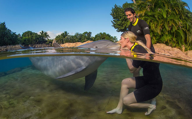 What Does All-Inclusive Mean at Discovery Cove Orlando?