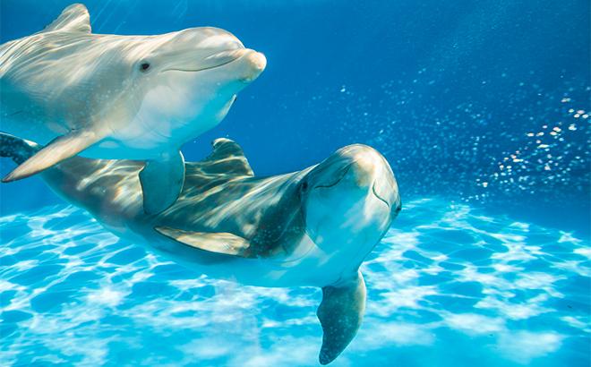 Dolphins at Dolphin Nursery