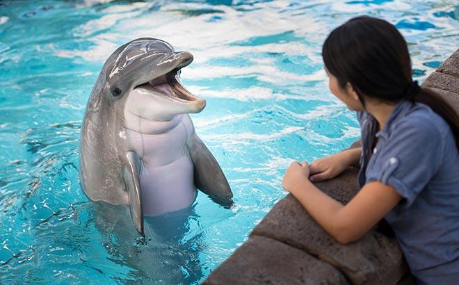 Education Tours at SeaWorld Orlando
