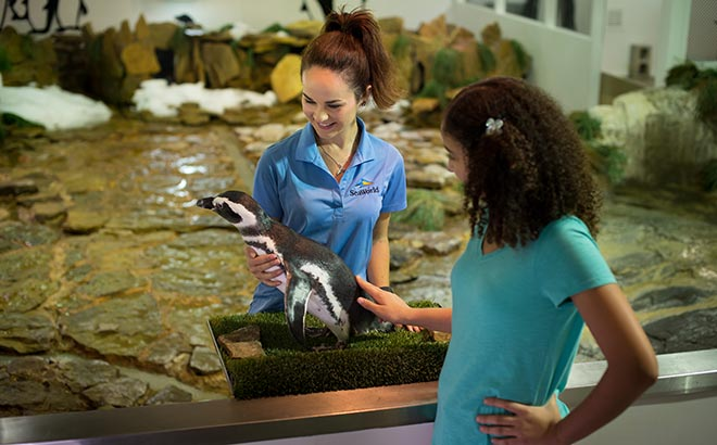 Educational Tours available at SeaWorld Orlando