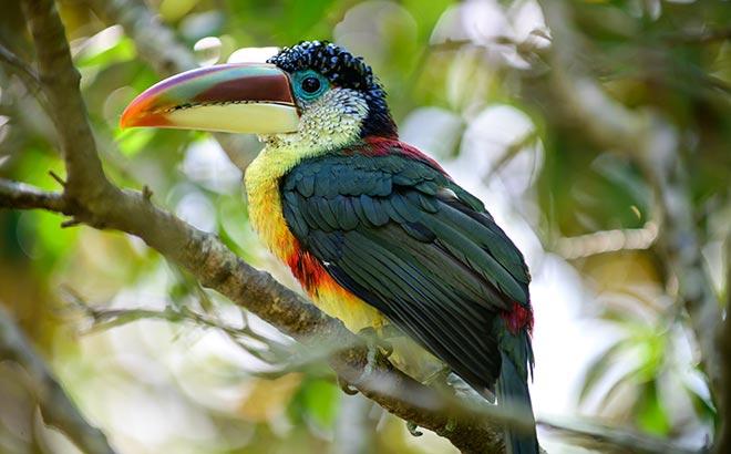 Bird aviary at Discovery Cove in Orlando Florida