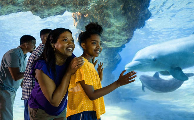 Family viewing dolphins at SeaWorld Orlando