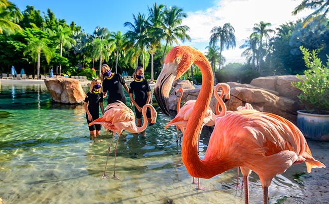 Flamingo Mingle experience at Discovery Cove Orlando