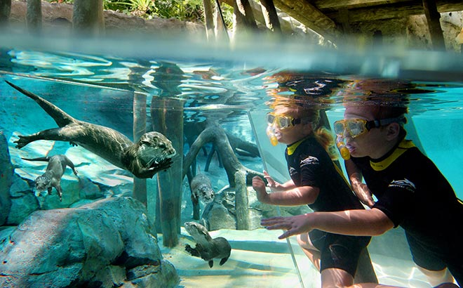 Otter Underwater Viewing at Discovery Cove Orlando
