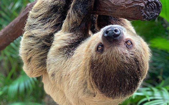 Sloth at Discovery Cove Orlando