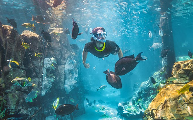 The Grand Reef at Discovery Cove Orlando