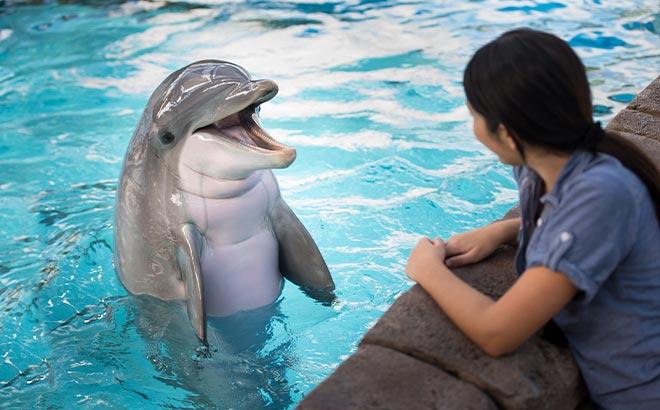 Dolphin Encounter tour at SeaWorld Orlando