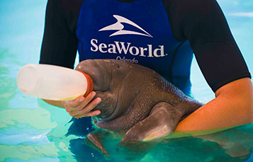 The SeaWorld Rescue team cares for animals 24/7/365.