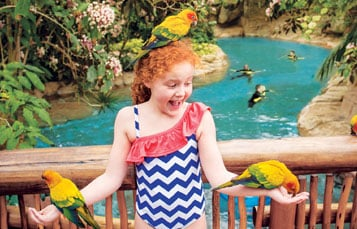 Get up close to colorful birds at the Explorer's Aviary at Discovery Cove.