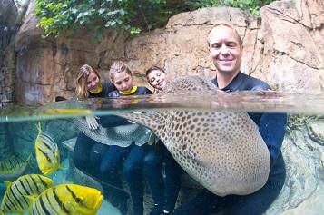 Discovery Cove Zebra Shark